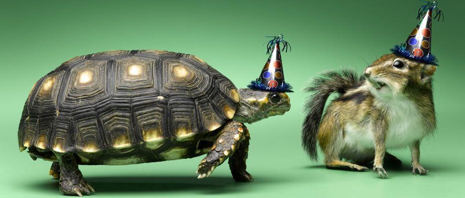 Parabéns atrasado pelo aniversário